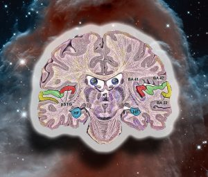 A brain in a real universe.